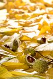 Leaf fall Royalty Free Stock Image