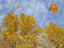 Leaf Fall Stock Images