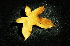 A Leaf of the Fall. A lonely leaf sitting in the spot of light Stock Image