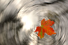 Leaf fall. The autumn leaf in falling Royalty Free Stock Photography