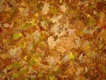 Leaf fall Stock Photo