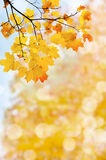 Leaf fall abstract background Royalty Free Stock Images