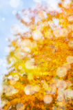 Leaf fall abstract background Royalty Free Stock Photo