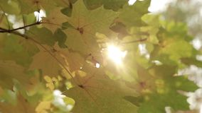 Rays of the sun through the autumn foliage stock video