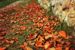 Leaf fall, autumn leaves on the path in the park. Stone fence, bright yellow red leaves underfoot, nature and seasons, backgrounds and design, juicy, beautiful royalty free stock images
