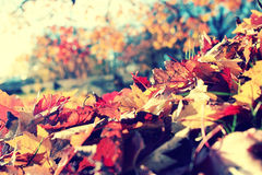 Leaf fall in autumn park Royalty Free Stock Images