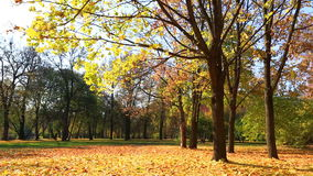 Leaf fall in beautiful autumn park stock video footage