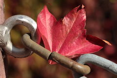 Leaf Fall. Colored leaves on a metal chain Stock Photography