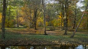 Leaf fall in Dutch park. Dutch park panorama, beautiful autumn landscape stock footage