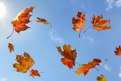 Leaf Fall in Sunny Day Stock Photos
