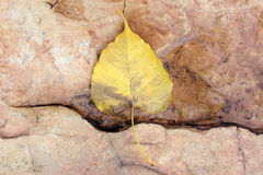 Leaf fall on granite stone ground texture background Royalty Free Stock Photo