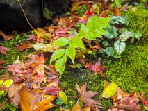 Leaf with fall maple leaf on the mossy rock royalty free stock photo