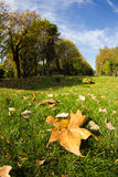 Leaf fallen on grass in autumn Stock Image