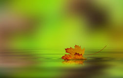 Leaf fallen on the water. Leaf fallen from a tree in the water Royalty Free Stock Photography