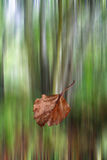 Leaf falling in autumn. A leaf falling from a tree with a blurred background Royalty Free Stock Image