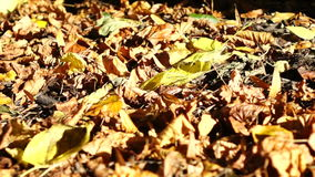 Leaf falling in slow motion stock footage