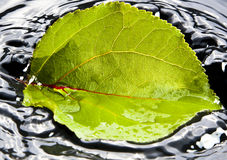Leaf falling in water. Leaf that fell in the water Stock Photo