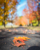 A leaf falls. A capture of a colorful leaf landing on a driveway in Oregon during fall Royalty Free Stock Photo