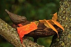 Leaf, Fauna, Bird, Beak Stock Photography