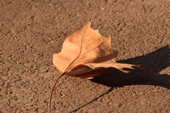 The leaf fell to the ground stock images