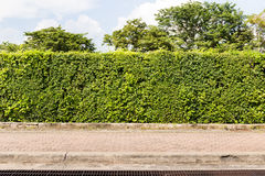 Leaf fence. Scene of leaf fence and pavement Royalty Free Stock Images