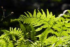 Leaf of the fern Stock Photo