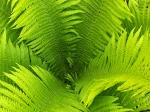 Leaf of fern. 