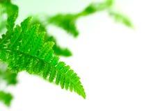 Leaf fern closeup, selective focus Royalty Free Stock Photos