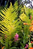 Leaf fern and flowers in the sunlight. Floral background stock photos