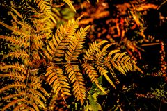 Leaf of fern. In forest Stock Images