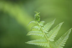 Leaf of fern Stock Photo