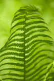Leaf of a fern Stock Photo