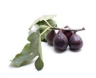 Leaf fig Royalty Free Stock Image