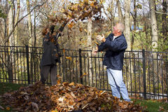 Leaf Fight Stock Images