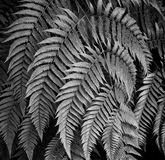 Leaf fine art Royalty Free Stock Photography