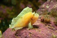 Leaf fish Royalty Free Stock Photos