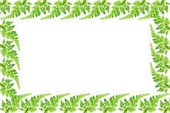 Leaf flame Stock Image