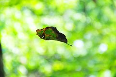 Leaf Floating Against Green Abstract Mood Background royalty free stock photos