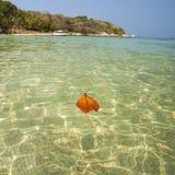 Leaf Floating Stock Image