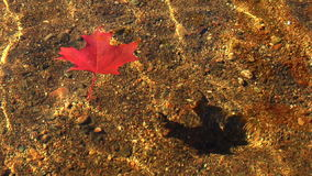 Leaf floating on clear water stock footage
