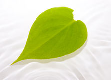Free Leaf Floating In Water Stock Photography - 3936162