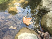 Leaf floating in river water by the rocks. A picture of a brown autumn leave that just fell from the tree and is floating in the river water by the rocks on the Stock Photography