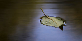 Leaf floating Stock Photography