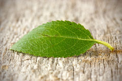 Leaf on the floor Stock Photo