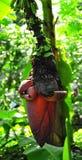 Leaf, Flora, Plant, Tree stock image