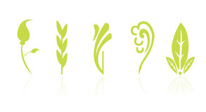 Leaf and floral icons. In white background Royalty Free Stock Photo