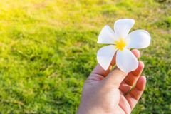 Leaf flower in hands stock photo