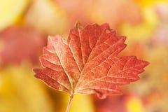 Leaf flying Stock Image