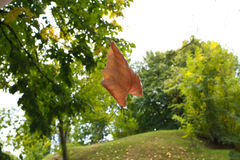 Leaf flying in air, autmn Stock Image