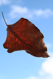 Leaf flying through the sky. Leaf flying through the blue sky with clouds royalty free stock photos